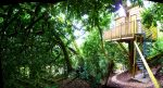 A genuine treehouse in Devon